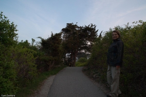 le vieil arbre du Marginal Way