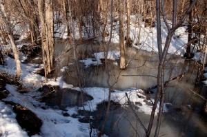 La forêt innondée
