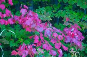 20140923-DSC_0474